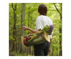 Panier de récolte du jardinier